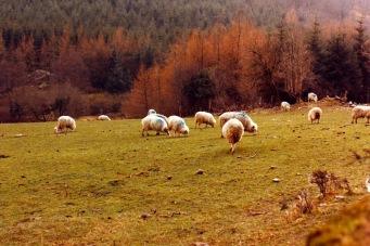 19860414 Ireland 054-29