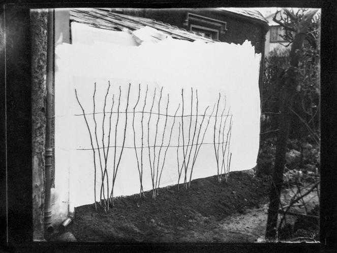 "Apple tree sapplings (7 March 1934). Turner, Belfast, i.e. ""Turners Fruit Markets Ltd"", Oxford St, Belfast? T3395/4HP/81-113 (alt. T16/297). Allison Collection, PRONI, Belfast, Northern Ireland."