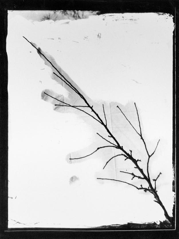 Apple tree cutting (1924-25). Turner = E. Turner, agricultural inspector, Dunowen Sons, Belfast? T3395/4HP/81-113 (alt. T16/297). Allison Collection, PRONI, Belfast, Northern Ireland.