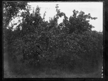 Orchard (1933-36). Turner. T3395/4HP/81-113 (alt. T16/297). Allison Collection, PRONI, Belfast, Northern Ireland.