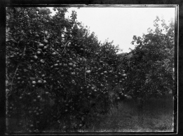 Orchard (3 Oct 1935). Turner. Mr Turner, Stormont. T3395/4HP/81-113 (alt. T16/297). Allison Collection, PRONI, Belfast, Northern Ireland.