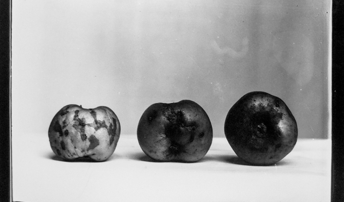 Mr Turner's apples